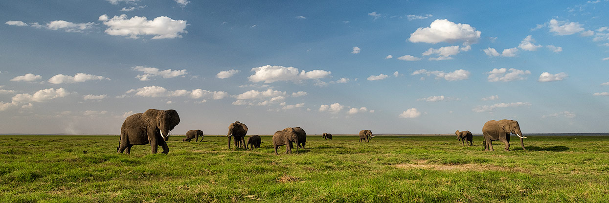 You'll see lots of Elephants with long tasks at Amboseli NP