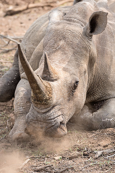 Private photo session with a Rhino