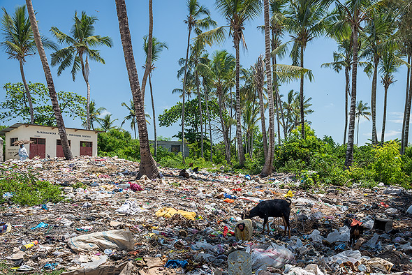 Behind the beach, the palm trees grow out of the garbage dumps